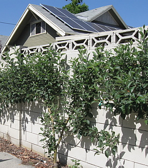Fruit trees and solar